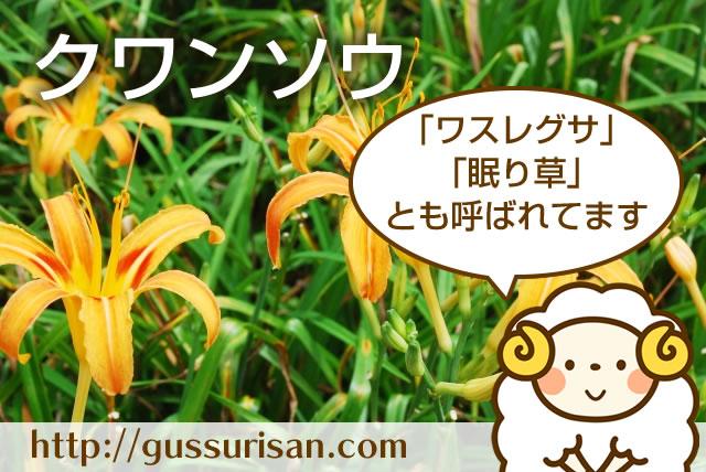 【クワンソウ】昔から伝わる眠り草でぐっすり睡眠